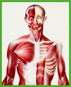El siglo XIX vio una revolución en la anatomía. Foucault cree que nuestro concepto actual de hombre procede de esa época