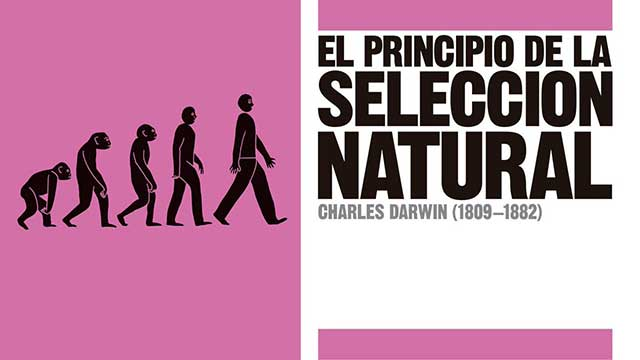 darwin-seleccion-natural