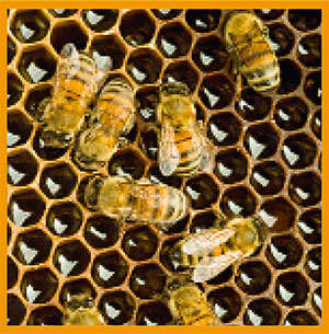 colmena-abejas