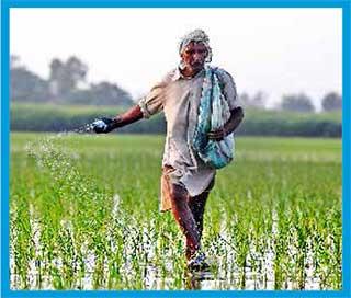 cultivo-arroz-india