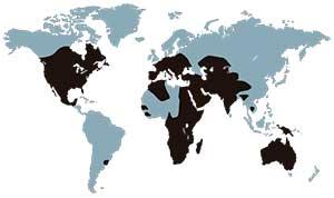 virus-nilo-occidental-mapa-mundo
